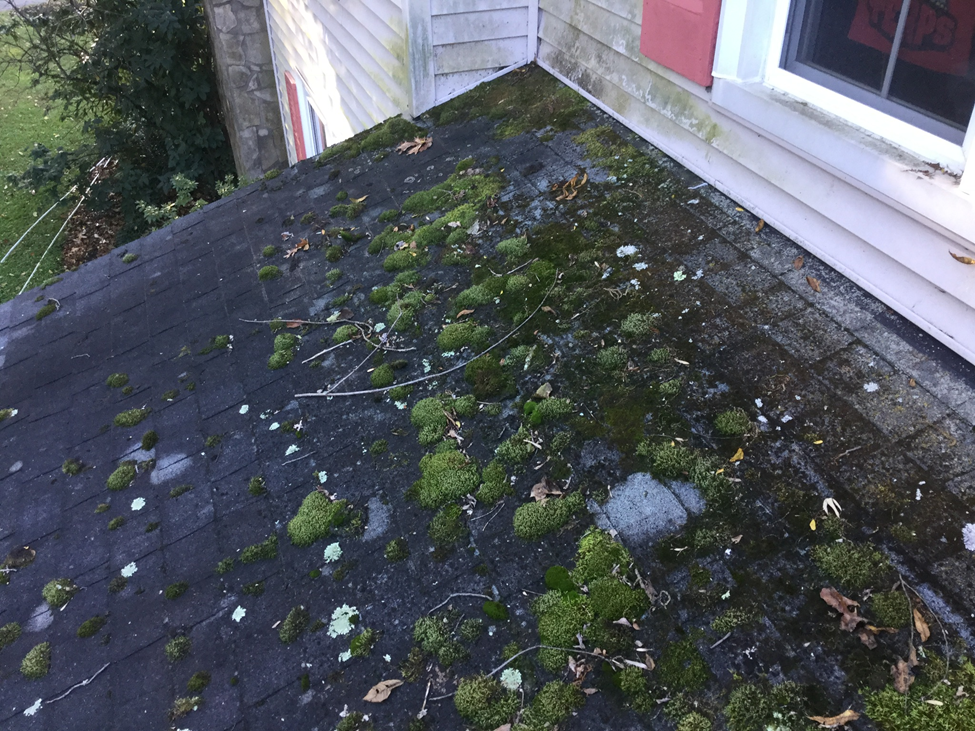 Roof Shingle Cleaning Maryland